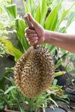 Durian el rey de frutas fotos de archivo libres de regalías
