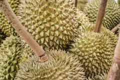 Durian en el mercado gastrónomo tailandés Fotos de archivo libres de regalías