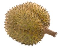 Durian entero aislado Foto de archivo libre de regalías