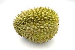 Durian entero de la fruta tropical en el fondo blanco Fruta sabrosa con el olor tremendo Foto exótica del estudio del durian de l imágenes de archivo libres de regalías