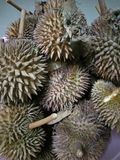 The Durian stock image