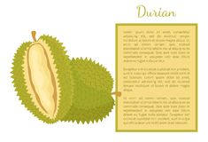 Durian Exotic Juicy Fruit Unusual Flavour Poster. Durian exotic juicy fruit with unusual flavour and odour vector poster with frame and text sample. Tropical vector illustration