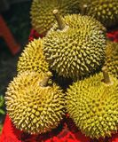 Durian is a famous sweet and tasty Asian fruit typical from Singapore Malaysia and Indonesia with curious spikes or stings and str Royalty Free Stock Image