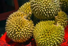 Durian is a famous sweet and tasty Asian fruit typical from Singapore Malaysia and Indonesia with curious spikes or stings and str Royalty Free Stock Photo