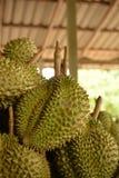 Durian från Thailand Royaltyfria Foton