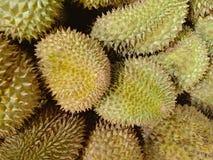 Durian fresco dall'azienda agricola organica in Tailandia fotografia stock libera da diritti
