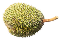 Durian fresco delicioso isolado no fundo branco Fotos de Stock Royalty Free