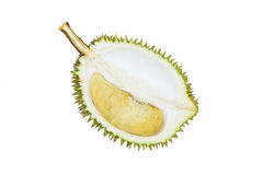 Durian fresco, tropicalfruit, re di frutta isolato sul BAC bianco Immagini Stock Libere da Diritti