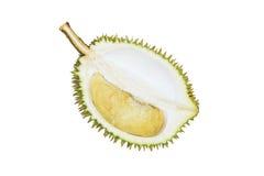 Durian fresco, tropicalfruit, rey de la fruta aislado en el CCB blanco Imágenes de archivo libres de regalías