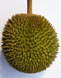 Durian fruit. straight shot of the durian (Durio Zibethinus), a fruit covered with thorns. It is heavy and about the size of a human head. The seeds inside are Royalty Free Stock Photo