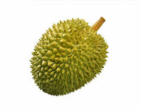 Durian Fruit Stock Photo