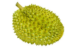 Durian Fruit Stock Image