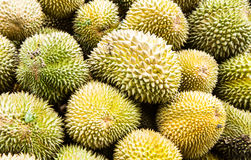 Durian fruit Royalty Free Stock Images