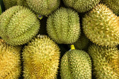 Durian fruit. The durian is edible fruit of a tree, having a hard, prickly rind, a highly flavored, pulpy flesh, and an unpleasant odor Stock Photography