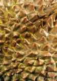 Durian fruit close up stock images