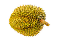 Durian fruit isolated on white background, Fresh fruit from orchard, King of fruit from Thailand Stock Photography