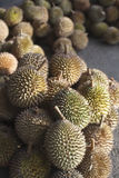 Durian Fruit, King of Fruit. The durian is the fruit of several tree species belonging to the genus Durio and the family Malvaceae (although some taxonomists Stock Photography
