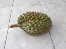 Durian fruit Royalty Free Stock Image