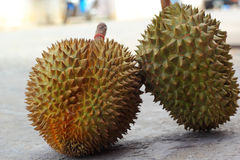 Durian fruit ripe for eaten Royalty Free Stock Images