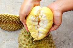 Durian fruit ripe for eaten in hand Stock Photography