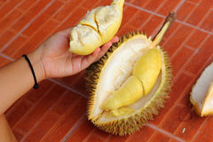 Durian fruit ripe for eaten in hand Stock Photo