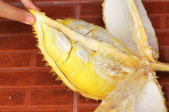 Durian fruit ripe for eaten in hand Royalty Free Stock Photography