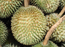 Durian fruit sale in farm market. Thailand Food background Royalty Free Stock Photography