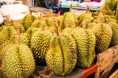 The durian is the fruit of several tree. Species belonging to the genus Durio and durian is king of fruit royalty free stock image