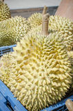 Durian fruit of summer Royalty Free Stock Image