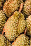 Durian fruit of Thailand. Royalty Free Stock Images