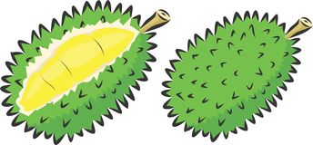 Durian Fruit Vector by raph malakian royalty free illustration