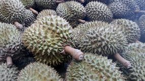 Durian fruits Royalty Free Stock Photo