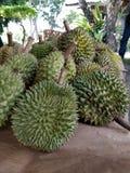 Durian fruits Stock Photos