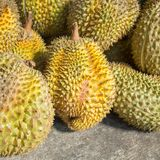 Durian fruits Royalty Free Stock Images