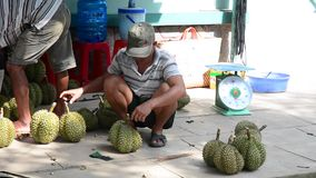 Durian fruits. People sell durian fruits on the street in Mekong Delta, southern Vietnam stock video