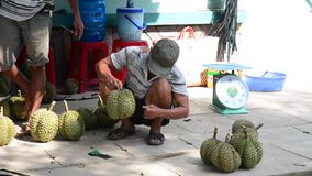 Durian fruits. Vietnamese people selling durian fruits on the street in Mekong Delta, southern Vietnam stock video footage