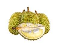 Durian gatunki Monthong Tajlandia odizolowywający na białym tle fotografia royalty free