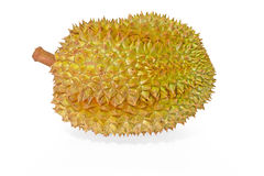 Durian. Huge fruit native to southeastern Asia 'smelling like Hell and tasting like Heaven', seeds are roasted and eaten like nuts Stock Image