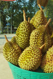 Durian i korgen Royaltyfri Bild