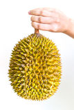 Durian incrinato Immagine Stock