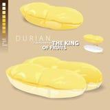 Durian ist Bedeutung des Königs der thailändischen Früchte Stockfotografie
