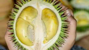 Durian kerantungan. tropical fruit endemic to Borneo stock images