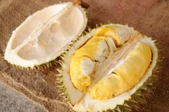 Durian King Royalty Free Stock Photo