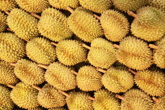 Durian , king of fruit Stock Photography