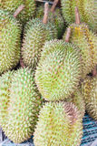 Durian, king of fruit Stock Images