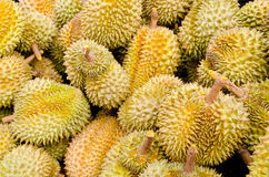 Durian, king of fruit, famous fruit in Thailand Royalty Free Stock Photography