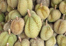 Durian, king of fruit Stock Image