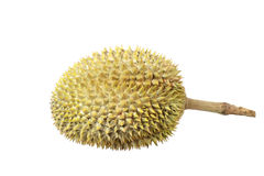 Durian, king of fruit. Stock Photography