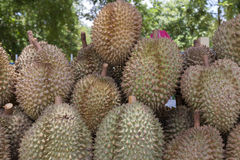 Durian king of fruit Royalty Free Stock Image