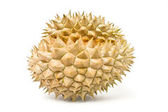 Durian, the king of fruit of South East Asia Stock Image